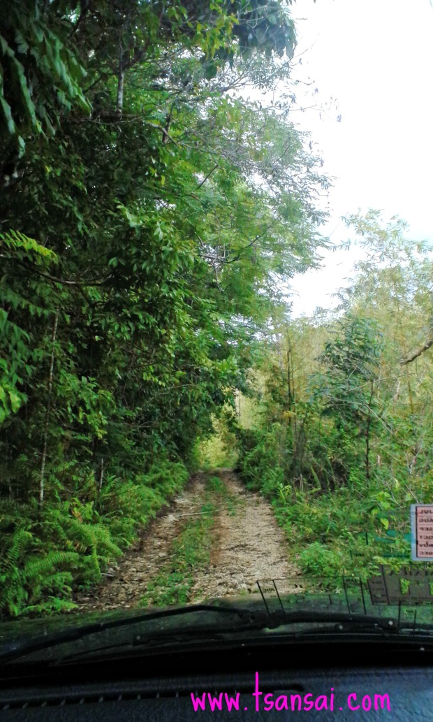 Rainforest-in-St-Mary-Jamaica