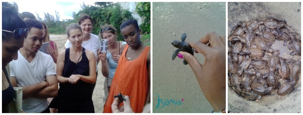 Turtle-project-St-Mary-Jamaica